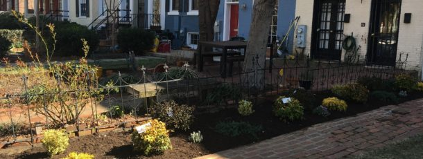 Amended Soil and Updated Flowerbeds